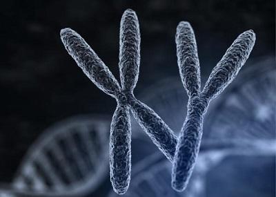 генетичне обстеження